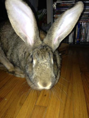 Nora the rabbit